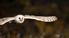 Photo of owl Thumbnail